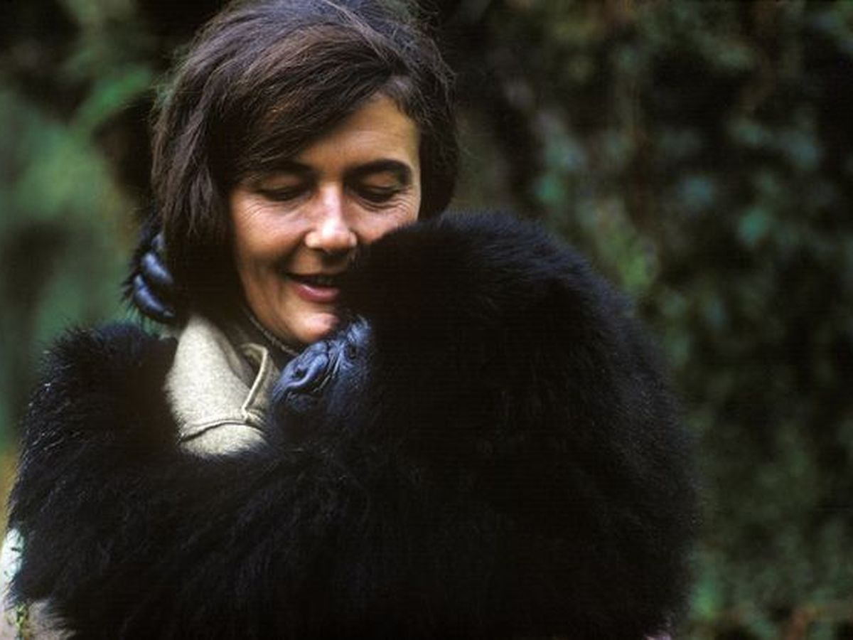 Dian Fossey, Woman of Discovery